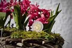 Concetto polacco del fiore dei soldi Fotografia Stock