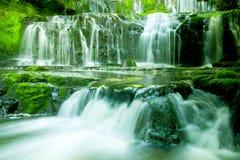 Concetto precipitante a cascata della natura della pianta della cascata bello fotografie stock