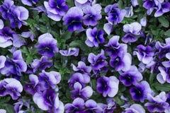 Concetto verde, bello fiore e decorazione Immagini Stock