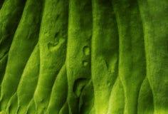 Concetto verde naturale della carta da parati L'estratto lascia la struttura Fotografia Stock