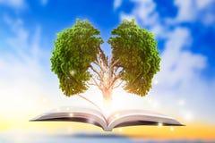 Concettuale con l'albero verde del cervello che cresce dal libro immagini stock