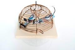 Concettuale: Euro fatture bloccate in mouse-trappola Immagine Stock Libera da Diritti