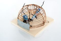 Concettuale: Euro fatture bloccate in mouse-trappola Fotografia Stock Libera da Diritti