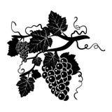 Concevez les éléments avec des groupes de raisins dans un style de vintage illustration libre de droits