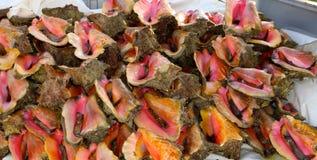 Conch Μπαχάμες στοκ εικόνες