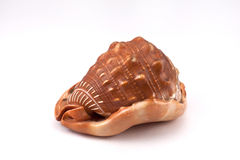 A conch. On the white background Royalty Free Stock Image