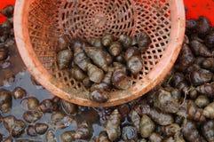 conch stock foto's