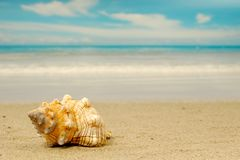 Conch stock photography