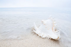Conch on the beach with pastel colours Royalty Free Stock Images
