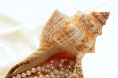 Conch filled with pearls Royalty Free Stock Photo
