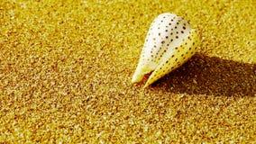 Conch on golden sandy beach,wind blow sand stock footage