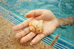 Conch in hand of woman at swimming pool. Royalty Free Stock Images