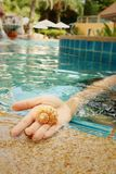 Conch in hand of woman at swimming pool. Royalty Free Stock Photography