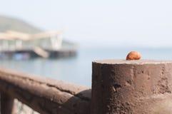 Conch. Hongkong Huangshi pier sea conch Royalty Free Stock Photography