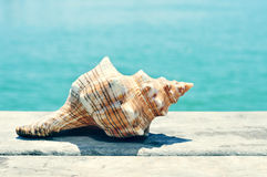 Conch on an old wooden pier on the sea, with a filter effect Stock Images