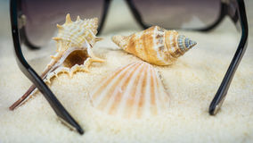 Conch and other sea shells and sunglasses on beach.  Stock Photos