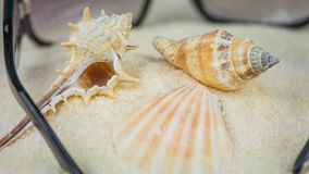 Conch and other sea shells and sunglasses on beach.  Stock Photography