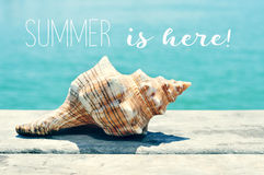 Conch on a pier and text summer is here Stock Photography