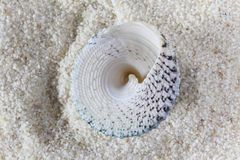 Conch on Sand Stock Photography