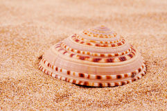 Conch on the sand Royalty Free Stock Photography