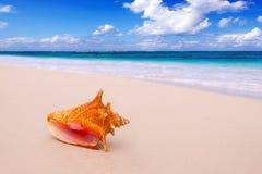 Conch Shell στην παραλία. Στοκ εικόνες με δικαίωμα ελεύθερης χρήσης