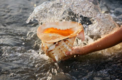 Conch shell Stock Photo