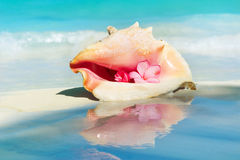 Conch Shell. On The Beach Sand. Caribbean Stock Photography