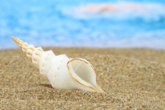 Conch shell. On the beach Royalty Free Stock Photos