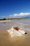 Conch shell on beach. Conch shell on a tropical beach Royalty Free Stock Image