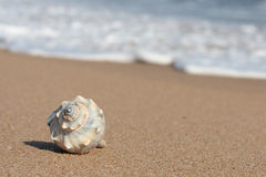 Conch shell on beach. Conch shell on ocean beach with waves Royalty Free Stock Photo