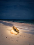 Conch shell beach Caribbean. A shell on the  coast of Grand Turk Royalty Free Stock Images