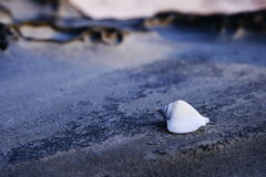 Conch shell on the beach Royalty Free Stock Image