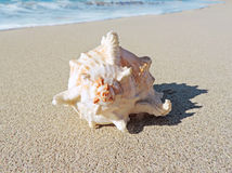Conch shell at the beach. Selective focus on the foreground with copy space. Sand and sea shell Royalty Free Stock Image