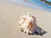 Conch shell at the beach. Selective focus on the foreground with copy space. Sand and sea shell Stock Photography