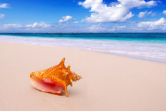 Conch Shell  on the beach. Conch Shell On Tropical Beach Royalty Free Stock Images