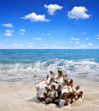 Conch shell on beach Stock Photo