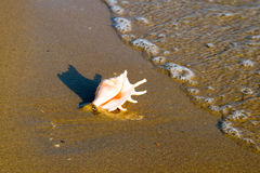 Conch shell on beach with waves Royalty Free Stock Photos