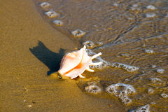 Conch shell on beach with waves Royalty Free Stock Photo
