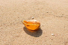 Conch shell on beach with waves. Conch shell on beach with waves Stock Photography