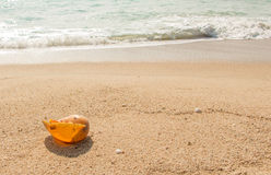 Conch shell on beach with waves. Conch shell on beach with waves Royalty Free Stock Photo