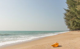 Conch shell on beach with waves. Conch shell on beach with waves Royalty Free Stock Image