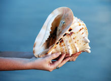 Conch shell Royalty Free Stock Photo