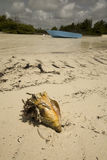 Conch shell and boat. A conch shell setting in the sand on the beach with a blue boat sitting in the ocean Stock Photo