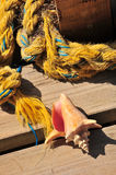 Conch shell and old rope Stock Images