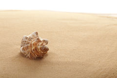 Free Conch Shell On The Beach Stock Photo - 14121770
