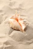 Conch Shell over sand. Stock Image