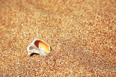 Conch Shell over sand. Summer beach background Stock Photography