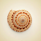 Conch shell. Picture of a conch shell on a beige background, with a retro effect Stock Photo