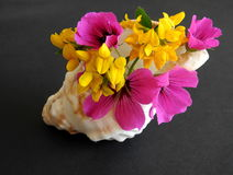 Conch shell, with pink and yellow flowers Stock Photography
