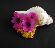 Conch shell, with pink and yellow flowers Royalty Free Stock Image